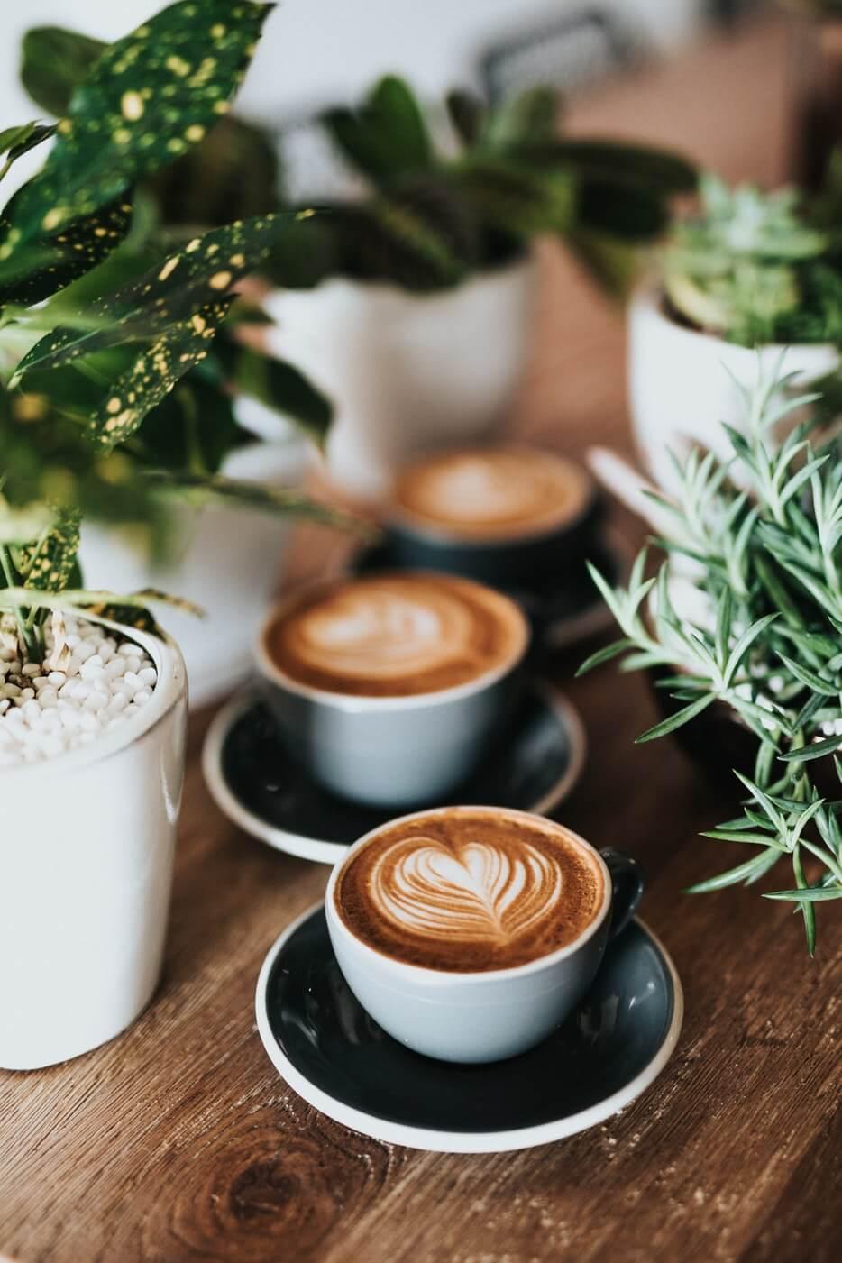 Dark Woods Coffee